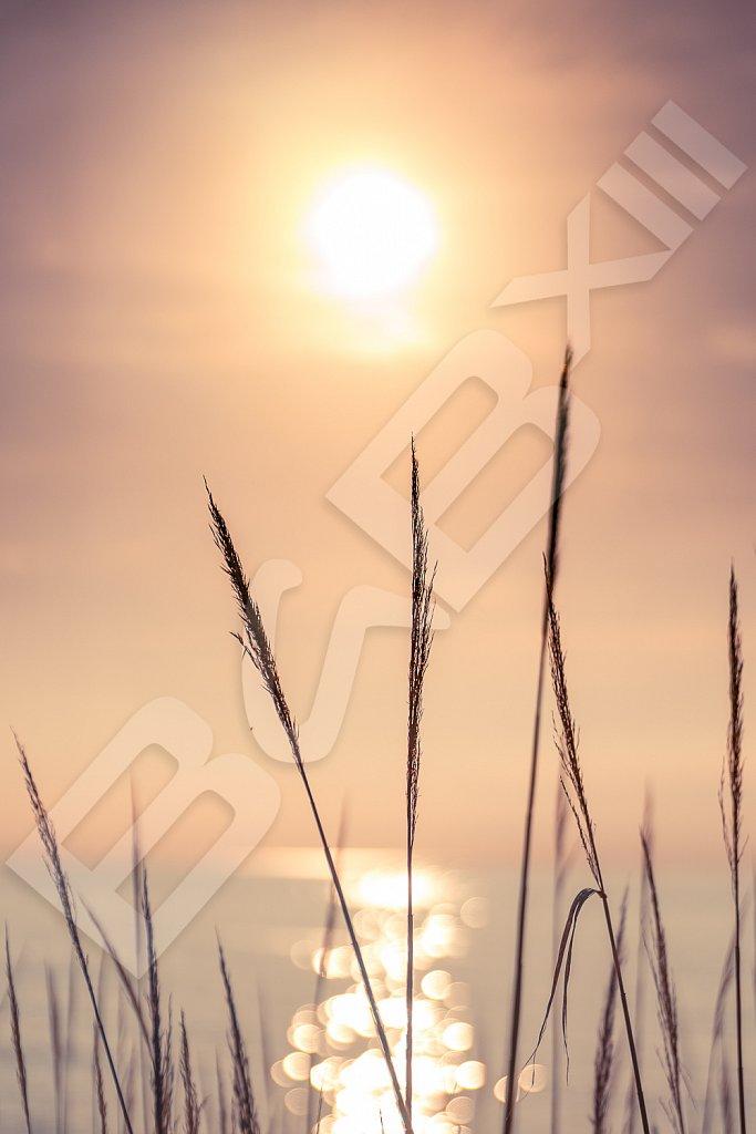 BabXIII-DSC01123.jpg